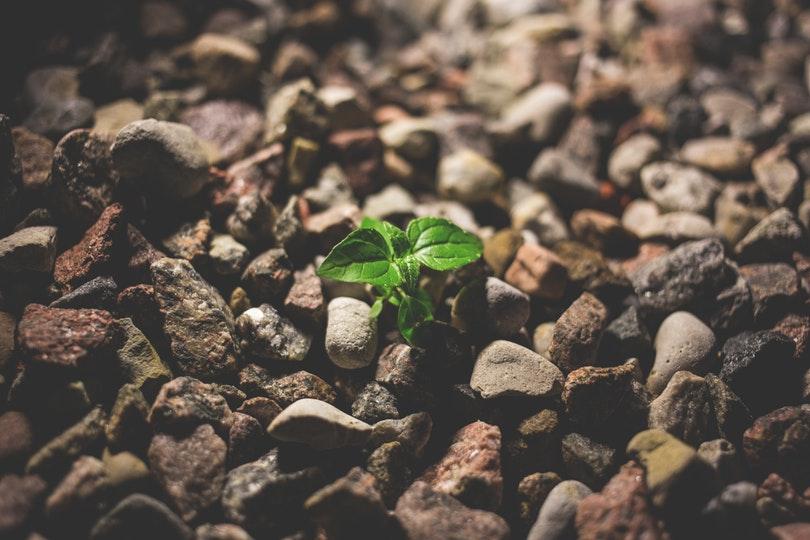 Plant een boom met Kadonation en WeForest