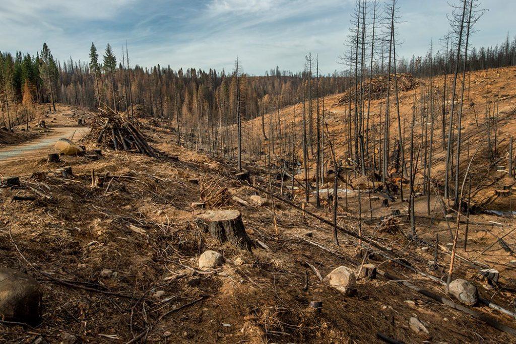 Plant een boom e ga de ontbossing tegen met Kadonation