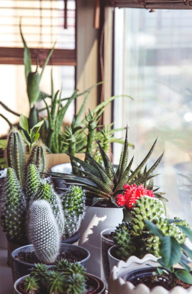 planten housewarming cadeau housewarming