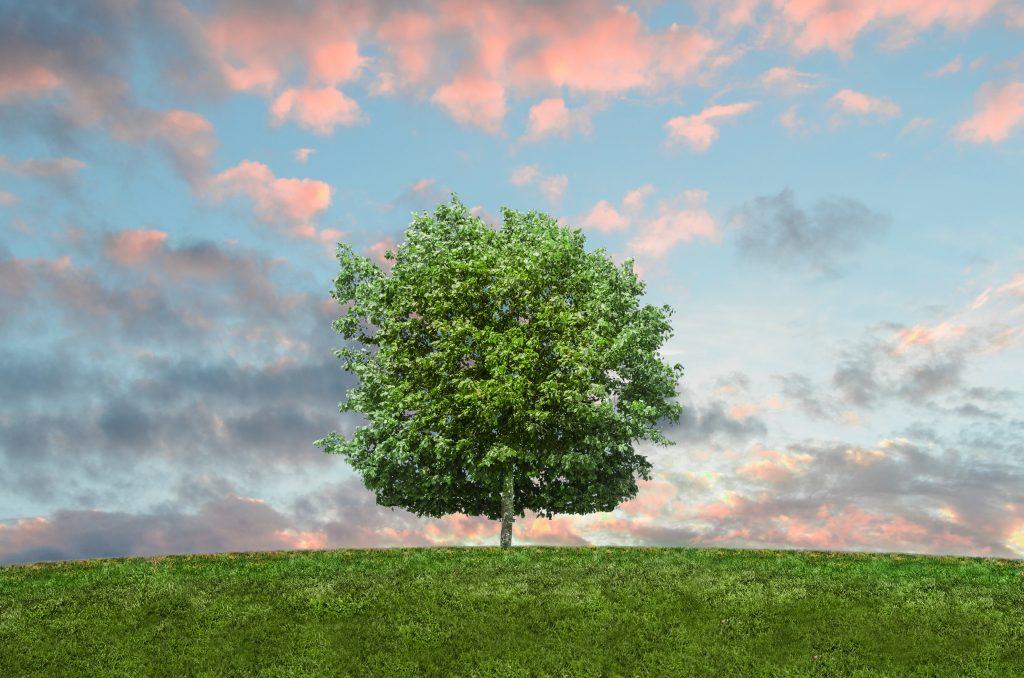 Kadonation tree