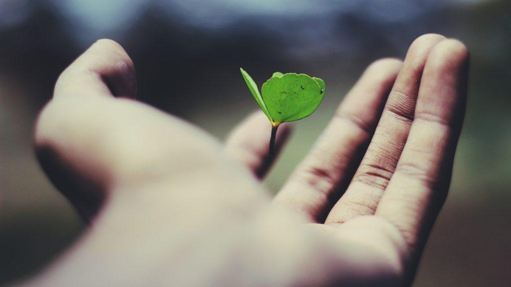 goede doelen steunen weforest