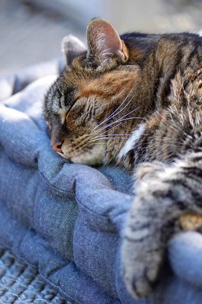 hiken leven als een kat